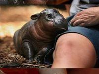 Hippos - my fav of all
