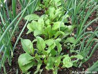 Inspiration _Edible Gardens + Gardening tips