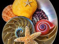 She Sells Sea Shells......