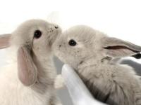 The Bunny Apocalypse is inevitable!