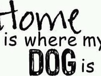 Dog Lover /Animal Lover♥