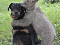 Cute Furry Friends 2