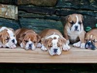 Dogs/ Animals