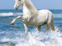 I Love Horses lV