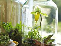 Gardening & Garden Projects