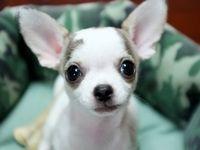 Cute animals.....