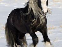 Horses..are so beautiful <3