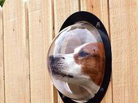 Ideas for incorporating your family dog into the yard so it's fun and enjoyable for everyone.