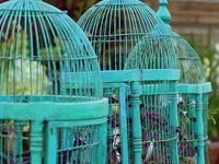 Birds and Birdcages of all sorts
