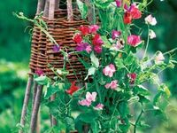 ***For my garden***