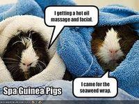 Guinea Piggies!!!
