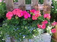 """""""Gardening requires lots of water - most of it in the form of perspiration."""" -  Lou Erickson"""