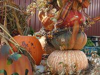 Autumn Delights!!