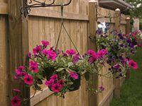 Gardening, Flowers & Veggies