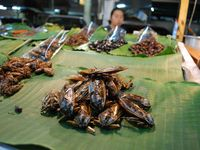 Food / Insects
