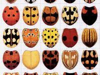 Bugs (invertebrates)