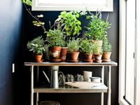 Contained gardening projects for small spaces, inside or out.   #plants #gardening #apartment #apartmentliving #succulents #green #planters #pots #jars #herbs