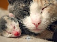 Cute Furries