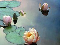 | Inner peace |