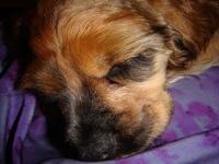 Awwww.....Precious Pups
