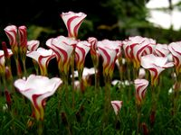 Exotic, rare, beautiful, unusual, or downright strange plants, flowers, & fungi! If you enjoy nature or gardening you may enjoy my other boards too!