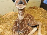 animals make me smile!