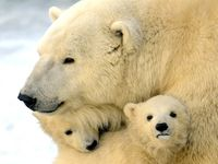 polar bears and puppy dogs