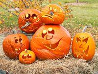Halloween - Carved Pumpkins