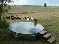 Homemade Swimming Pools