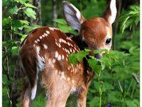Awwww I love animals! ❤