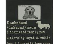 Buster, the daschund