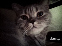 my lovely cat :)