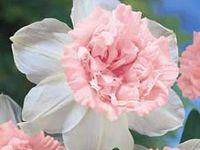 Floral/Garden Photographs