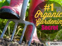 We grow a little of everything in the Konoske Garden. Here are some tips that work well for us.
