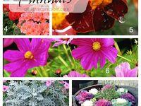 Flowers & outdoor ideas