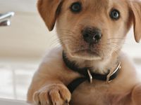 Dogs! Love em! Love em!