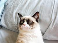 Sarcastic 'Grumpy Cat'