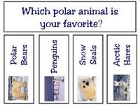 Artic Animal Preschool theme