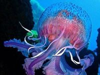 Animal Sea - Jelly Fisth ,Oktopus , Corals
