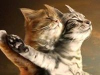 Animal Pics that I Can't Resist Pinning