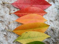 Color, colors, combinations