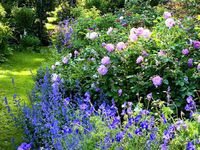 Ideas for a better gardening season