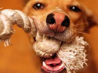 Doggies   Woof- Woof!