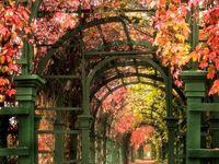 Garden/Structures