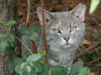 Animal Rights & Awareness & Endangered Wildlife