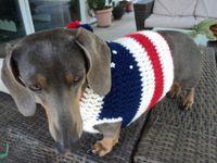crochet para mascotas!