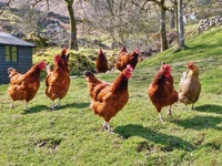 Hobby Farm Ideas