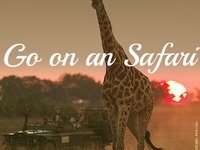 Out of Africa living