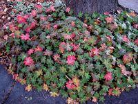 Coleman- Landscape Plants
