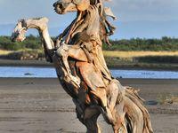 Beach finds - driftwood